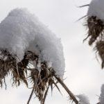 冬の原付で雪や路面凍結、エンジンがかからない時の注意と対処法